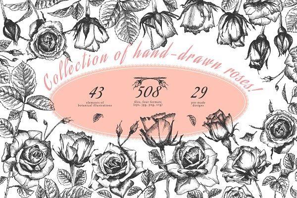 Download Hand drawn sketch Roses