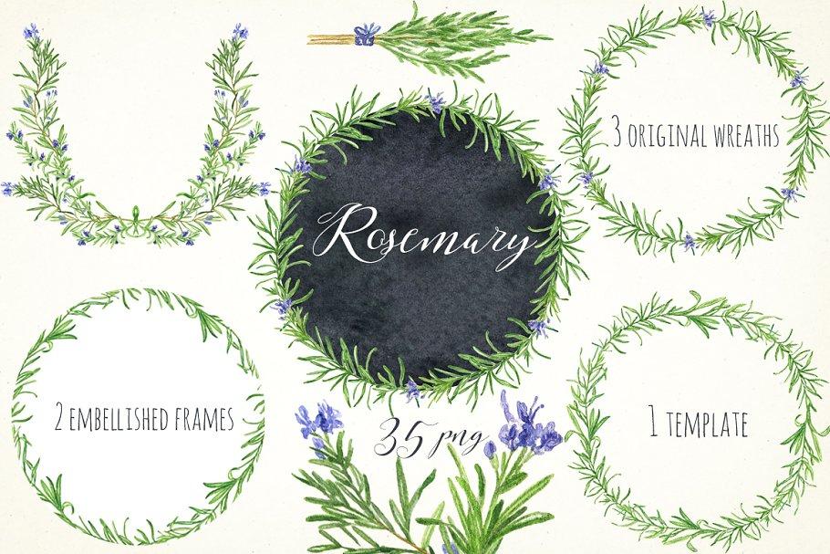 Download Rosemary. Watercolor clip art.