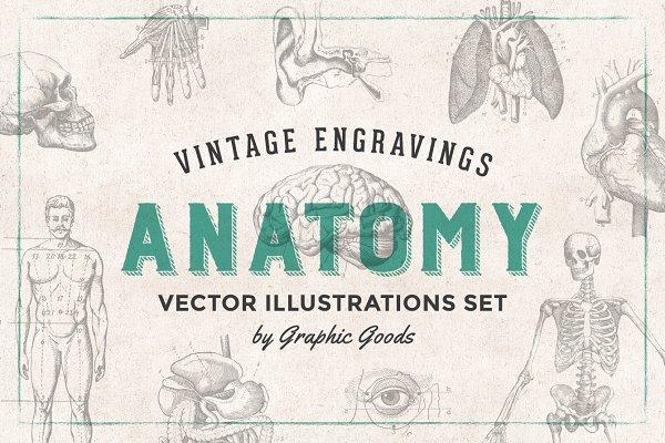 Download Anatomy Engravings Set