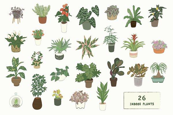 Download 26 Indoor Plants