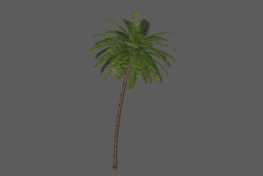 Download Palm_Tree_2