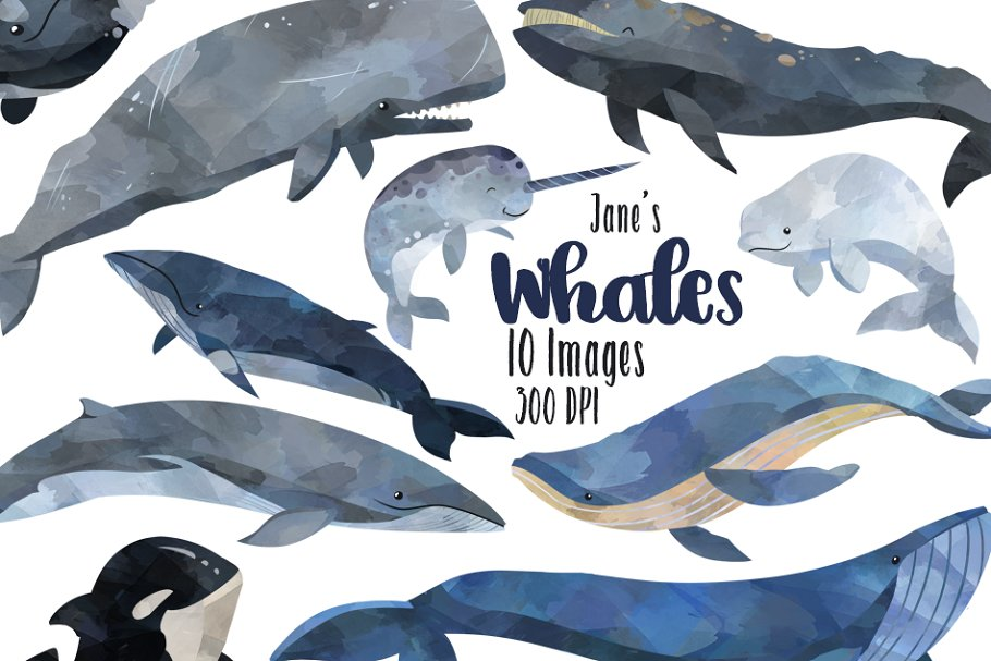 Download Watercolor Whale Clipart