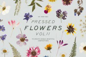 Download Pressed Dry Flowers & Herbs Vol.2