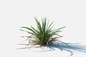 Download Simple grass
