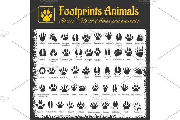 Download Animal Tracks - North American animals