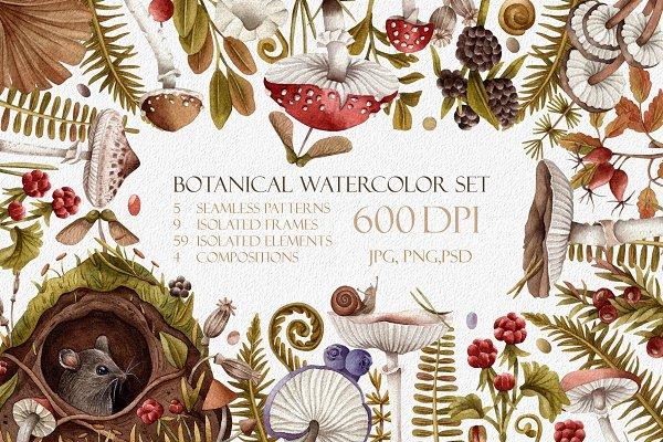 Download Botanical watercolor mushrooms