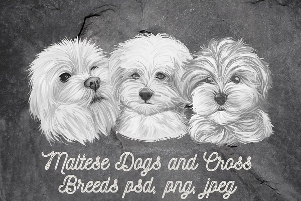 Download Maltese Dogs Cross Breeds PSD