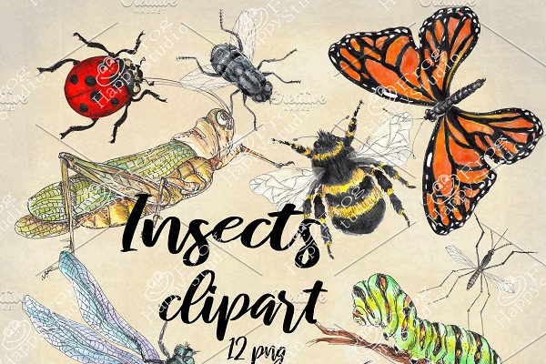 Download Watercolor Collection of Insects