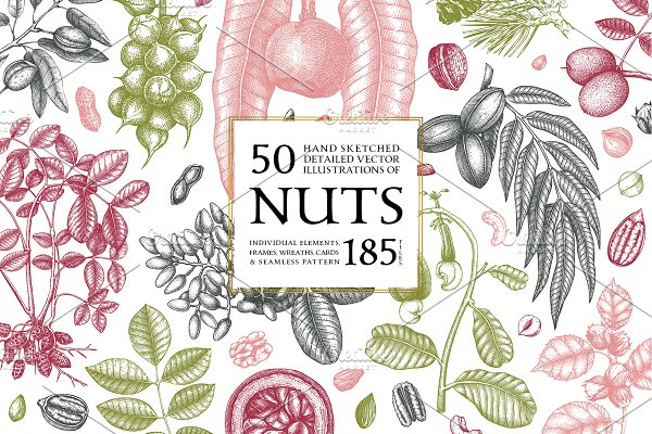 Download Hand Drawn Nuts - Vector Collection