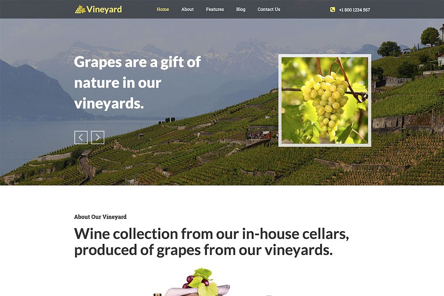 Download Hot Vineyard